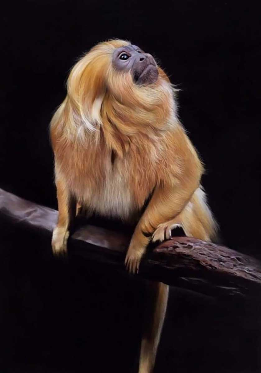 primate pastel pencil entry in Wildlife Artist of the Year 2020