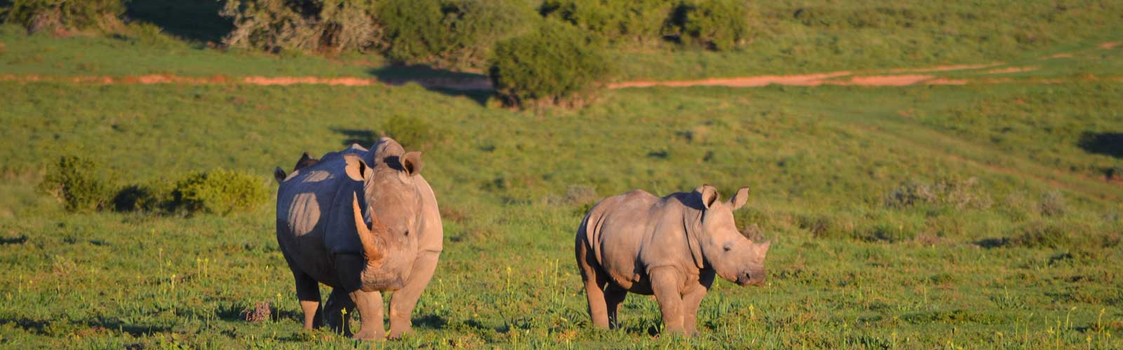 photograph of a rhino and her calf in africa