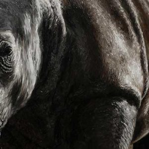Rhino, oil painting entry in Wildlife Artist of the Year 2020