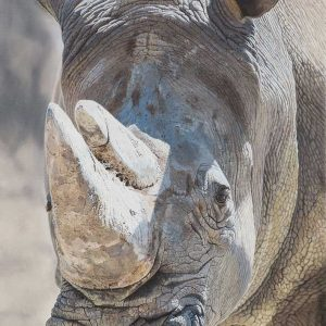 Rhino oil artwork entered Wildlife Artist of the Year 2020