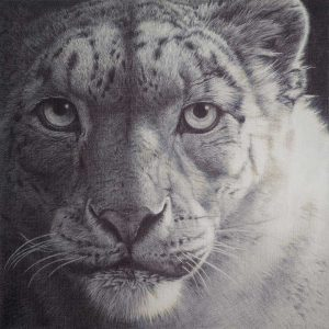 Snow Leopard biro entry in Wildlife Artist of the Year 2020