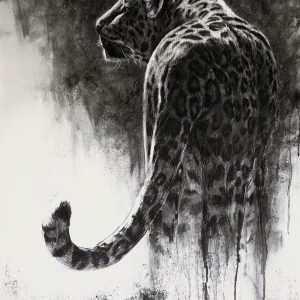 Snow Leopard charcoal entry in Wildlife Artist of the Year 2020