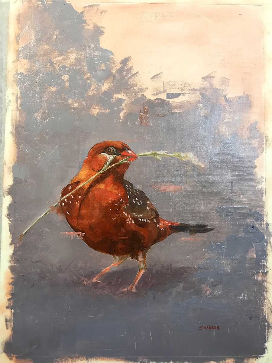 Strawberry Finch oil entry into Wildlife Artist of the Year 2020