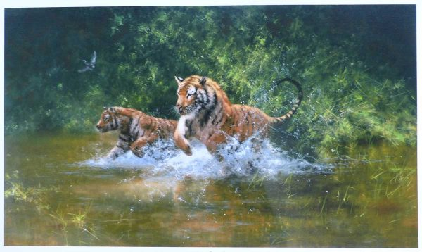 David Shepherd, Limited Edition - Tigers in Water Print