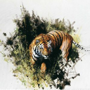 David Shepherd Limited Edition - Tiger Print