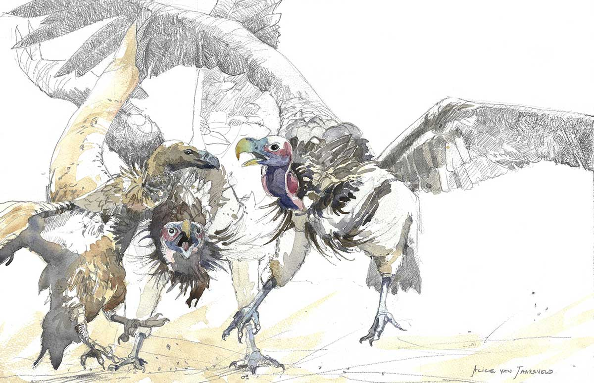 African birds of prey fighting watercolour painting