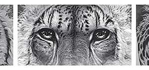 Buy this Big cat eyes by Gary Hodges in aid of conservation