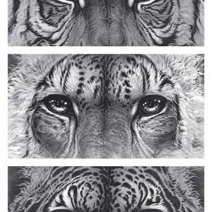 Buy this Big cat eyes print by Gary Hodges in aid of conservation
