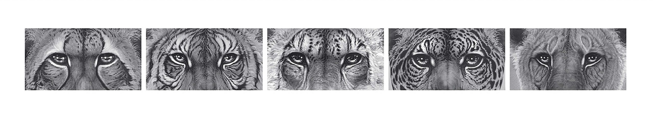 5 detailed drawings of wild cats eyes