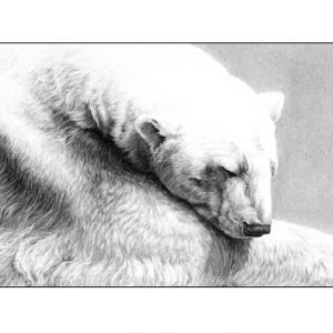 Polar bear pencil drawing by Gary Hodges