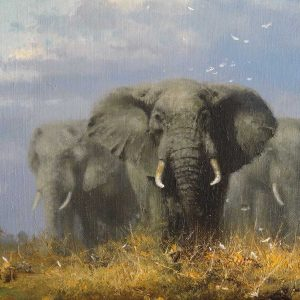 Elephants, oil on canvas by David Shepherd