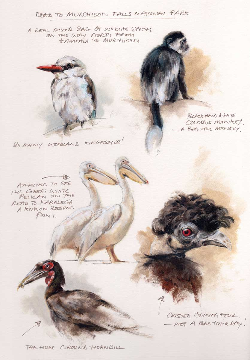 Mandy Shepherd Bird Sketches in graphite plus oil and water based mediums.