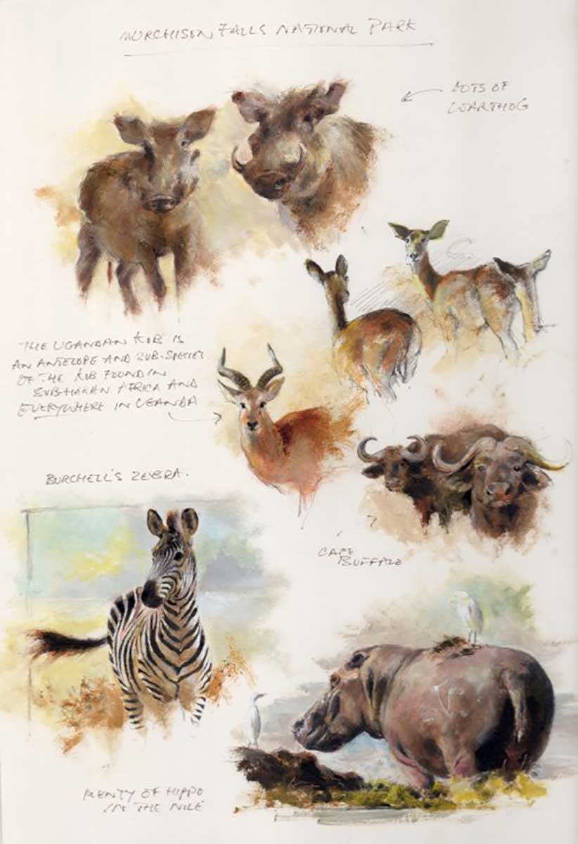 Mandy Shepherd Murchison Falls National Park Sketches in graphite plus oil and water based mediums.