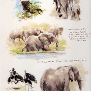 Mandy Shepherd Elephants Sketches in graphite plus oil and water based mediums.