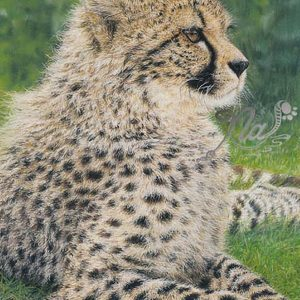 Cheetah pastel drawing