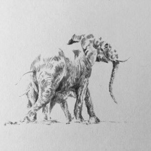 detailed elephant sketch of an elephant with a calf