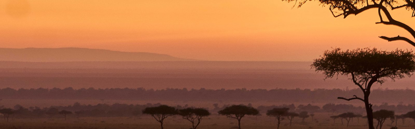 Photograph of an African landscape at dawn with pink hue