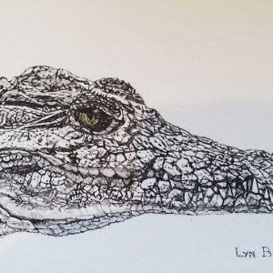 Postcard 4, Crocodile