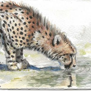 Postcard 12, Cheetah