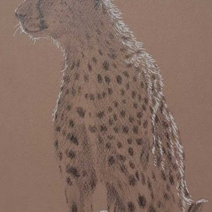Postcard 19, Cheetah (looking left)