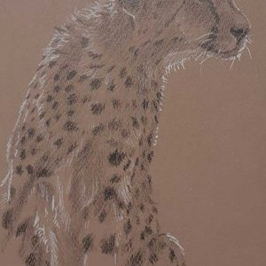 Postcard 20, Cheetah