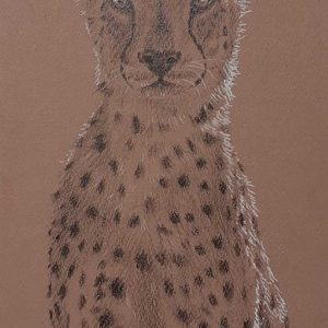Postcard 21, Cheetah (front facing)