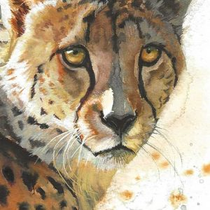 Postcard 26, Cheetah