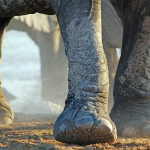 Photograph of elephants' legs close up