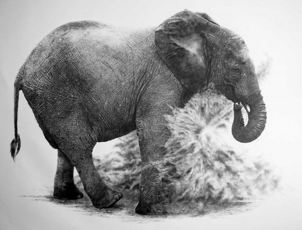 Elephant, graphite pencil by David Filer