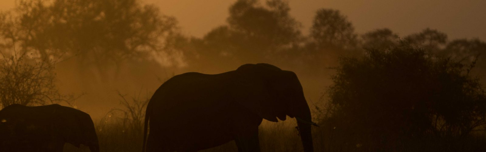 Cropped image of two elephants photographed at sunset