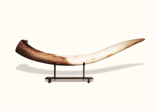 Tusk, wooden sculpture, by Simon Max Bannister