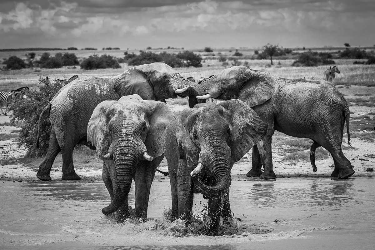 elephants, photograph, by James Kydd