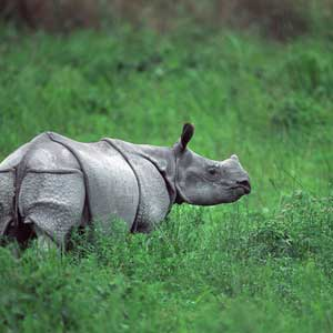 dave back photograph of a rhino