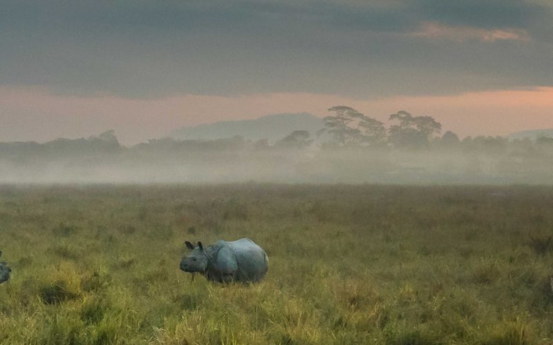 photograph or indian rhinos