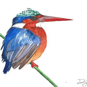 Postcard 29, Kingfisher