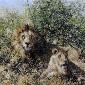 Lion, oil on canvas, by David Shepherd