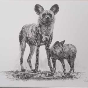 painted dog adoption graphite sketch