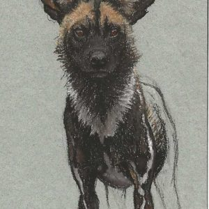 Postcard 40, Painted Dog