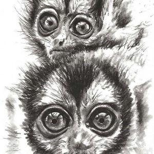 Postcard 39, two Monkey's