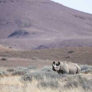 rhino photographed by james kydd