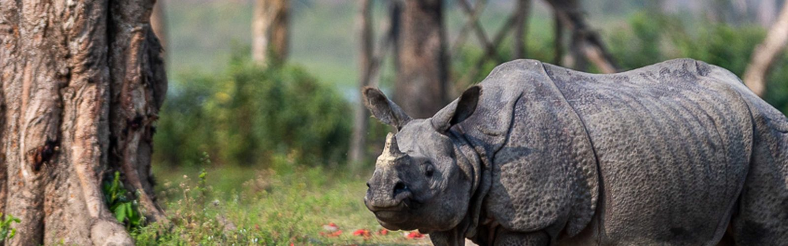 indian rhino photographed by matt armstrong-ford