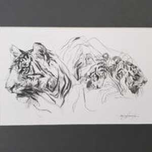 Pencil sketch of two tigers by Emily Lamb