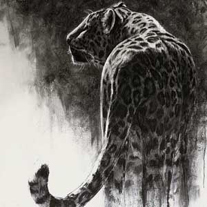 daniel wilson charcoal drawing of a snow leopard