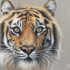 Postcard sized painting of a tiger's head facing forward by Jo Maynard
