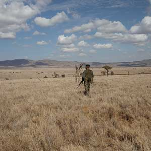 fighting wildlife crime