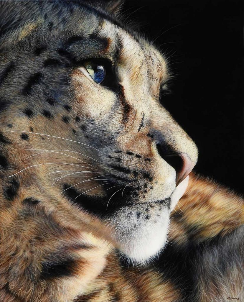 snow leopard painting for sale by Amber Tydesley