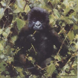 Buy this baby gorilla print by David Shepherd in aid of conservaation