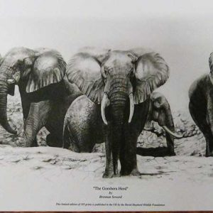 Buy these Elephants by Brennan Seward in aid of conservation