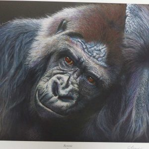 Buy this print by Leslie Evans in aid of conservation