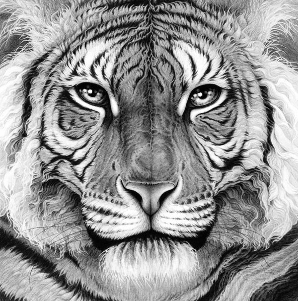 Buy Majesty by Gary Hodges in aid of conservation